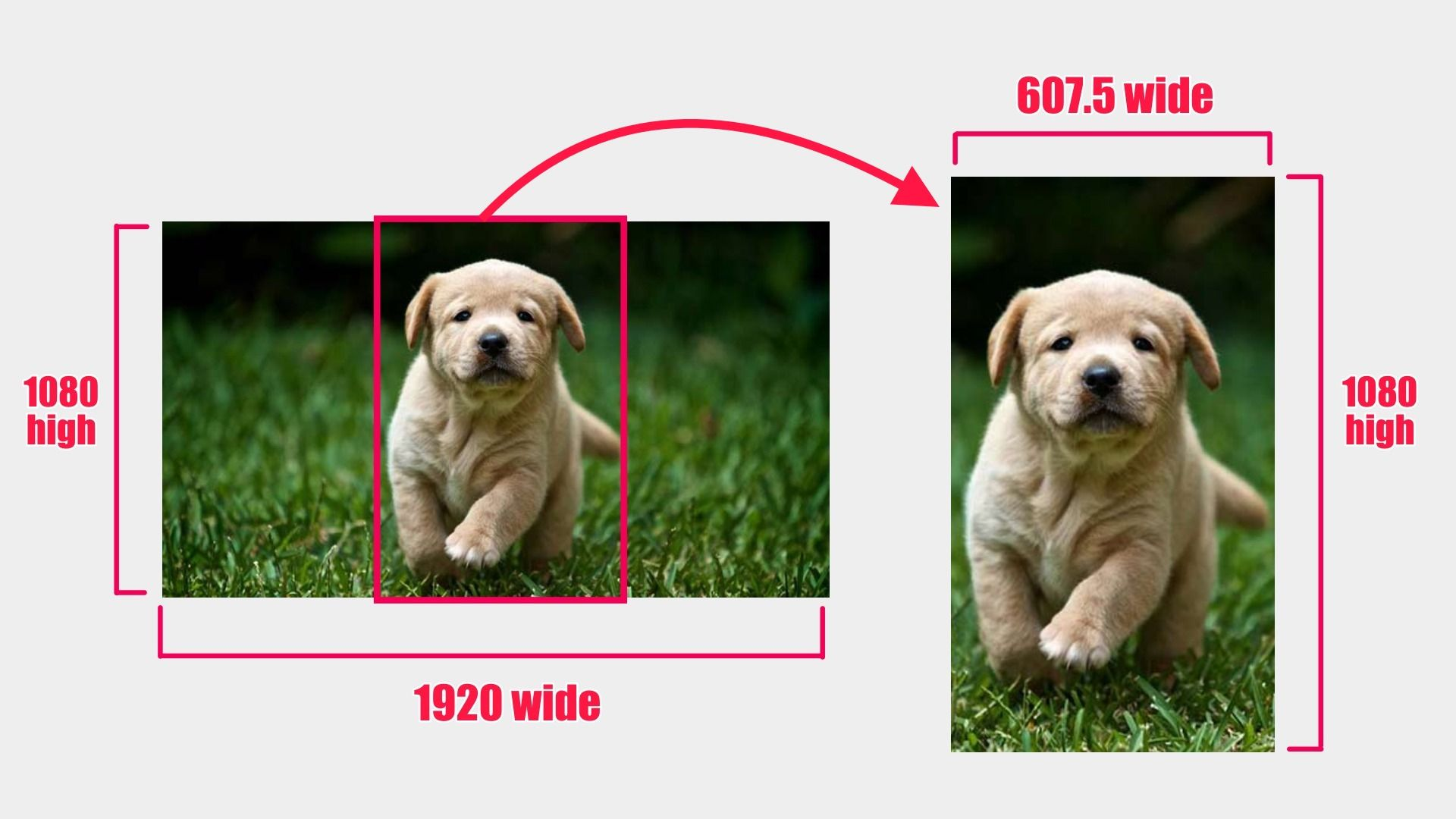 A graphic to demonstrate what resizing and cropping looks like. On the left, a widescreen image of a puppy is shown, with the dimensions 1080 pixels high and 1920 pixels wide. A vertical red rectangle is overlaid to show how the user might crop part of the photo out. On the right side, a vertical image of the puppy is shown, in a 9:16 crop of the original left image, with the dimensions 607.5 pixels wide and 1080 pixels high.