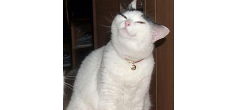 The original Smug Cat image.