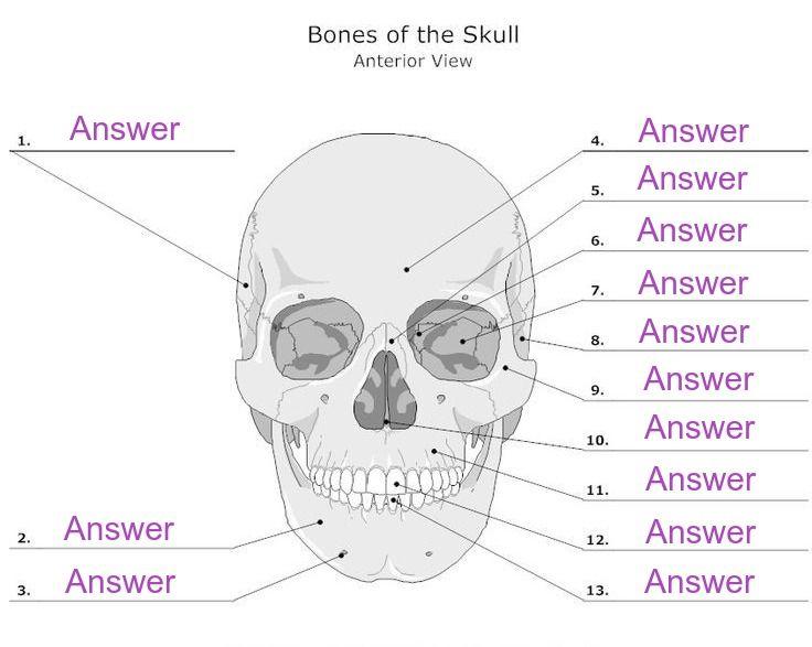 Create Digital Worksheets to Help Students Learn Anatomy