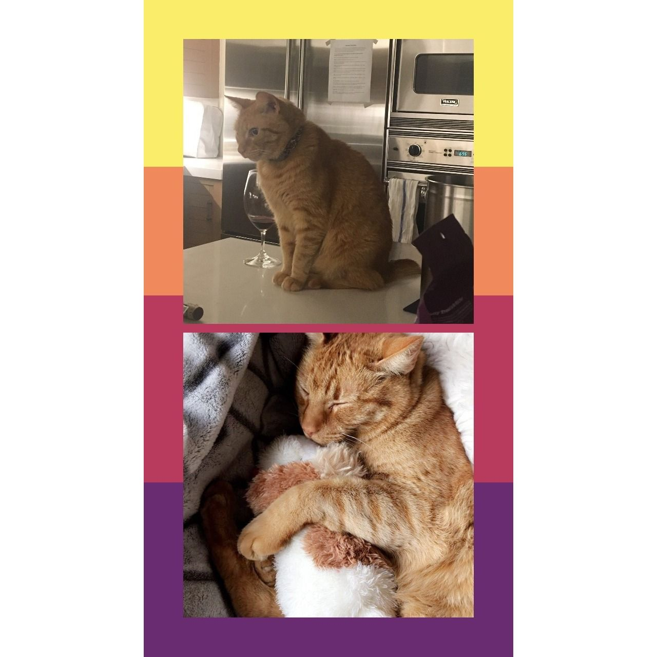 An example of a photo collage with a colored background for Instagram Story.