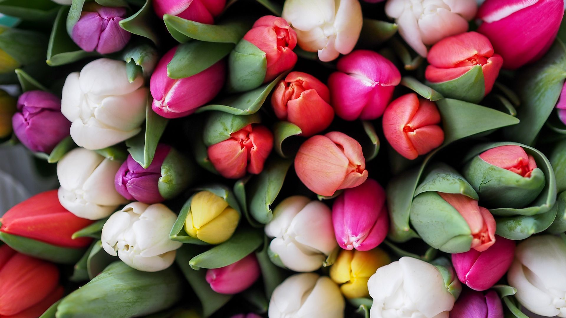 a bunch of yellow, purple, and white tulips
