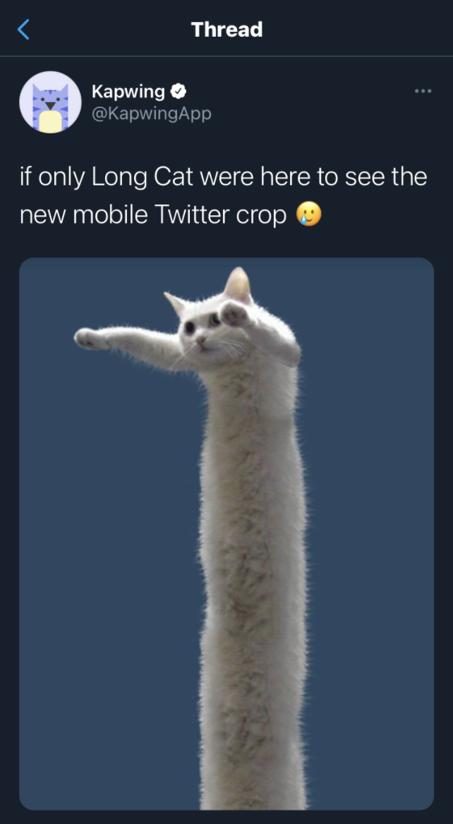 A screenshot of a tweet using the famous Long Cat meme to demonstrate Twitter's new, less restrictive image cropping.