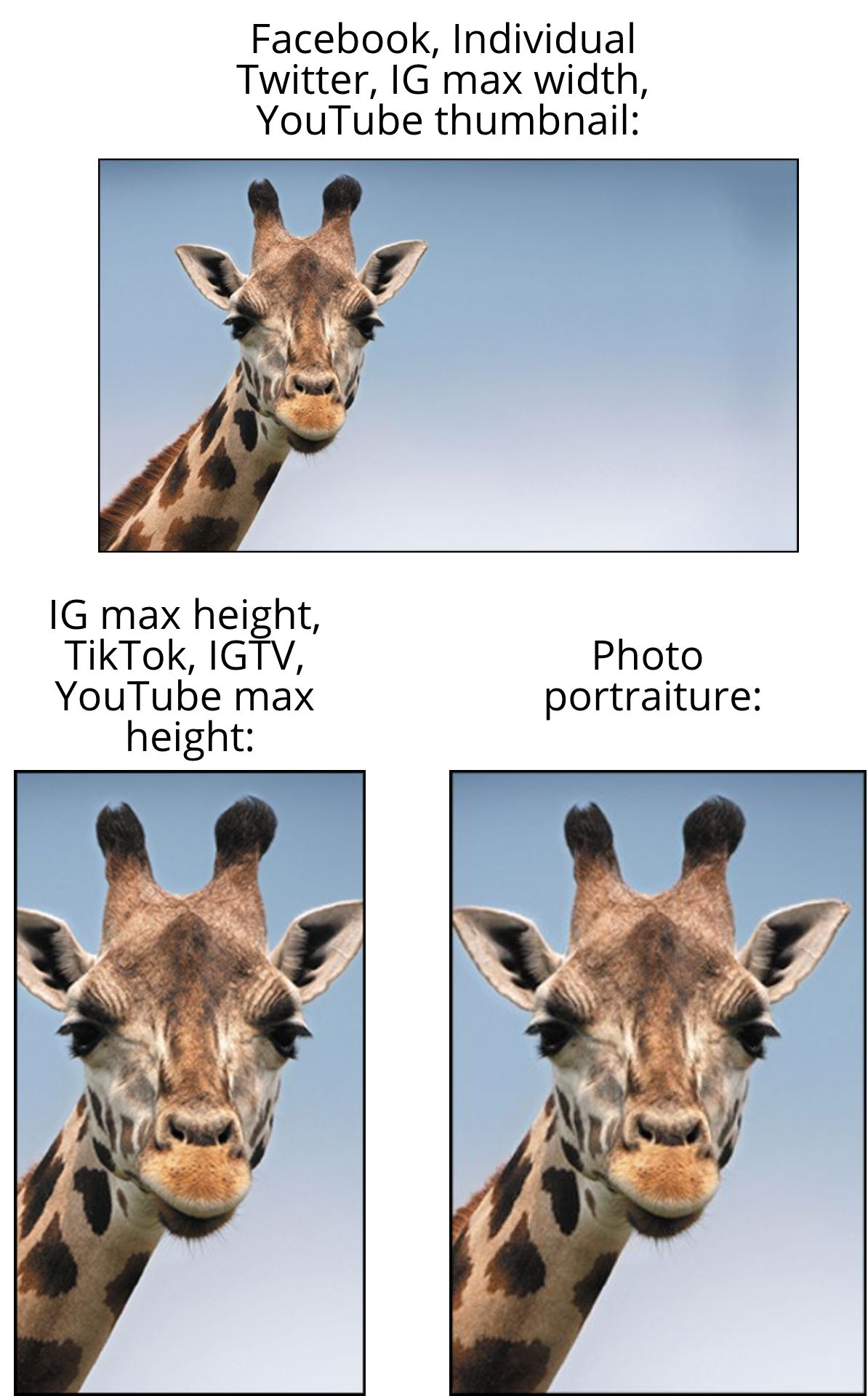 Three photos of a giraffe in different aspect ratios, labelled with the platforms that use those dimensions.