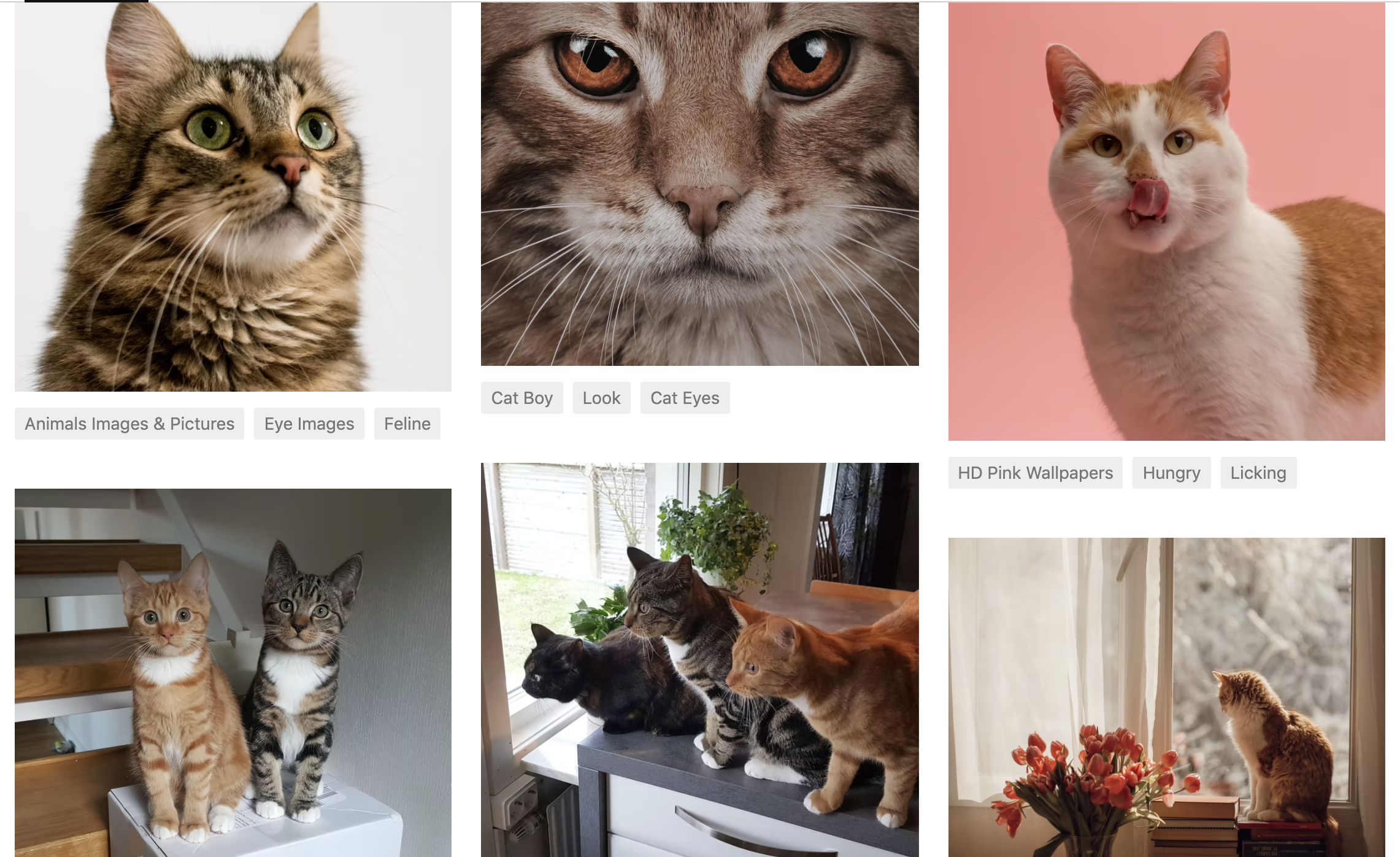 A screenshot of several pictures of cats found in Unsplash.