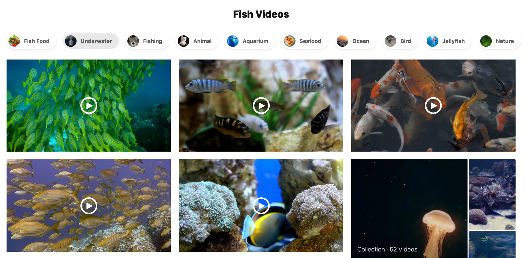 A screenshot with several videos of fish found in Pexels.